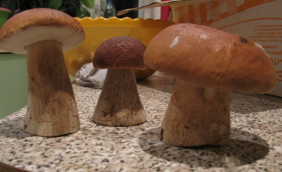 20 Відер грибів! ось такий «урожай»