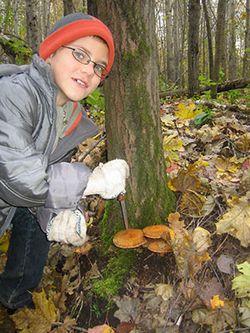 300 Кілограмів грибного щастя
