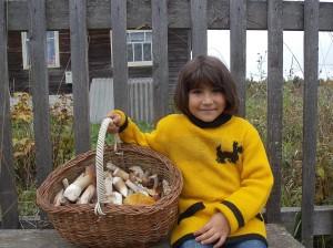Міцний білий гриб, ароматний рижик, красень підосичники, Справний підберезник - для кожного знайдеться місце у кошику