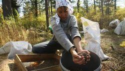 Бізнесменам омської області дадуть грошей на збір грибів та ягід