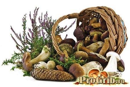 Цілющі і поживні властивості грибів при лікуванні хвороб