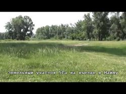 Цілий тиждень виживати в лісі довелося 80-річній пенсіонерці з Кіровської області