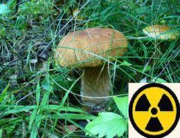 З Чорнобильської зони намагалися вивезти 130 кг грибів