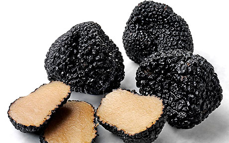 Чорний трюфель середнього розміру - завбільшки з яблуко, дрібні гриби - не більш волоського горіха або вишні, а найбільші представники