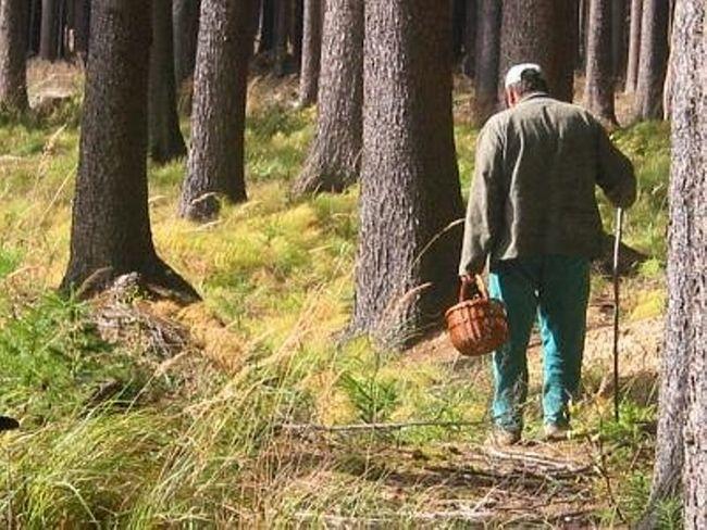 Що потрібно взяти вирушаючи до лісу