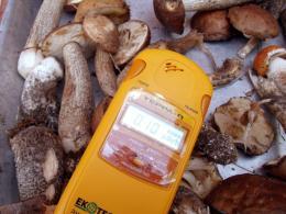 Багато гриби небезпідставно вважаються акумуляторами радіонуклідів