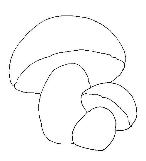 1. Намалюй на аркуші паперу контур