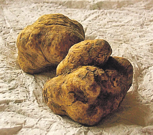 Найдорожчий гриб трюфель