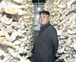 Фермер з кндр вирощує гриби вагою 20 кг