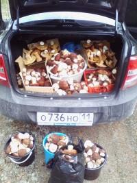 Фотофакт: сиктивкарец зібрав гриби на 6000 рублів