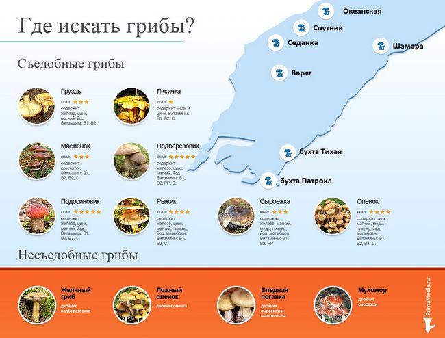 Печериці, сироїжки, грузді можна знайти як в місті, так і в передмісті в Приморському краї
