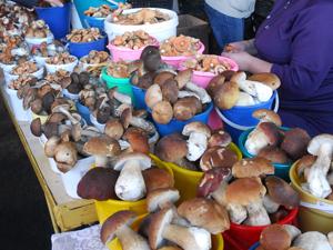 На ринку купка грибів коштує від 50 рублів