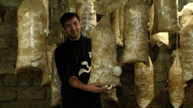 У Крапивинського районі почнуть цілий рік виробляти гриби гливи