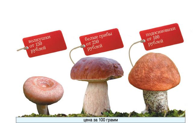 Зараз майонезну відерце красноголовців обійдеться любителям грибів в 100 рублів.