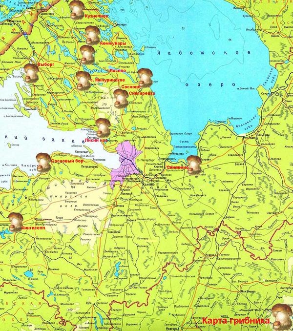 Карта грибника ленінградської області. сосново