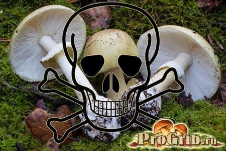 Отруйний гриб бліда поганка