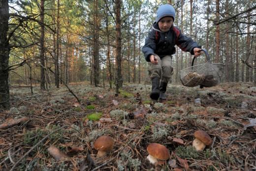 Куди Брянцев з'їздити за грибами