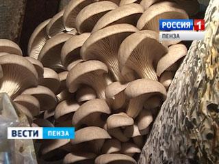 Лунінскій грибівники планують отримувати на рік близько 600 тонн глив