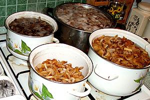 Варка грибів у маринаді