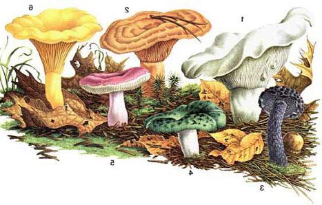Народна енциклопедія грибів