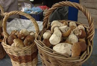 Не треба боятися грибів, потрібно просто більше знати про них