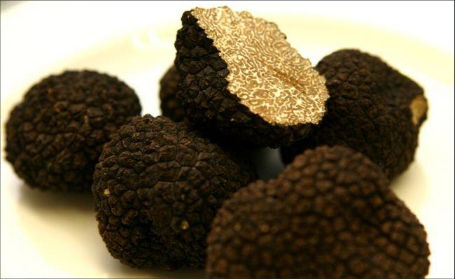 Нова методика культивації чорних трюфелів