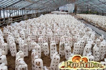 Обладнання та приміщення для вирощування глив