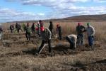 Всеросійська акція «Живи, ліс!» Пройшла в Амурській області. У Благовіщенському районі було висаджено близько 6000 саджанців модрини.