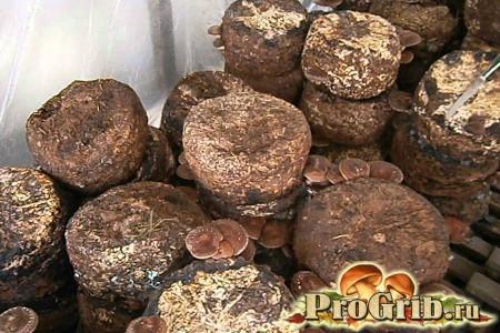 Основні способи та технології вирощування шиітаке в домашніх умовах