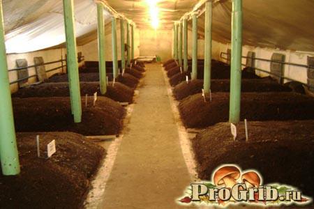 Приміщення для вирощування грибів