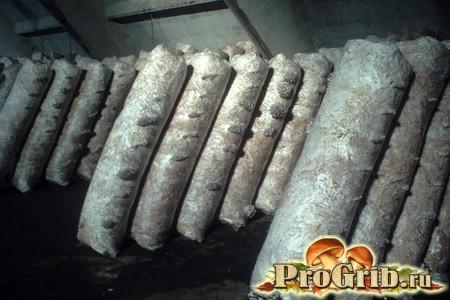 Особливості посіву і нюанси зберігання мііцелія глив