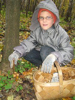 Отруїтися можна навіть неотруйними грибами