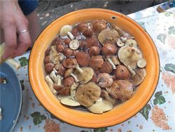 По гриби: ціни на лисички, грузді і підосичники на ринках Іжевська