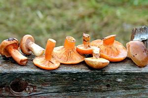 Підготовка грибів до заготівлі про запас