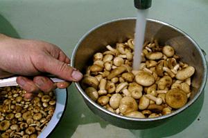 Промивання і вимочування грибів