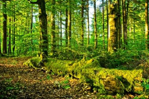 Похід в ліс може обернутися трагедією