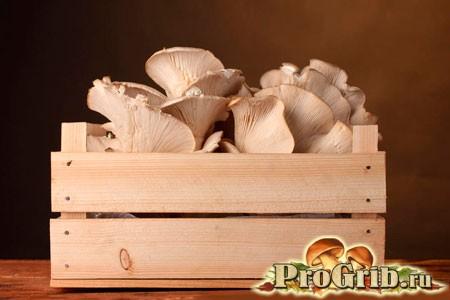Правила і способи вирощування глив в домашніх умовах