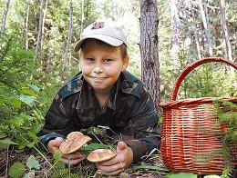Правила «тихого полювання». невідомі факти про їстівних і отруйних грибах