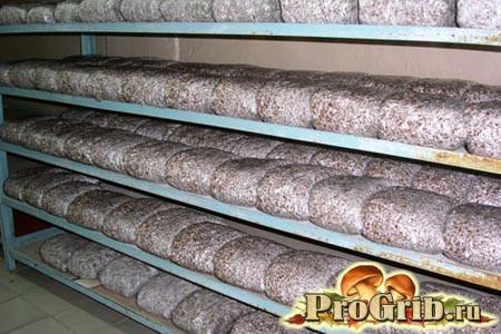 Правильне зберігання міцелію глив - запорука якісної продукції та високого врожаю