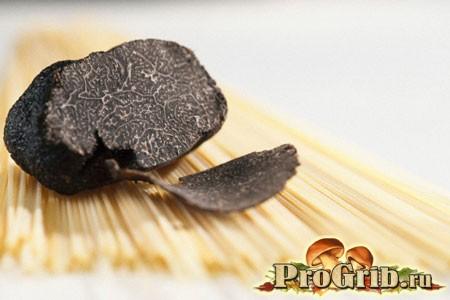 Різноманітність видів трюфелів: особливості аристократів грибного царства