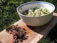 Рецепти страв з іван-чаю