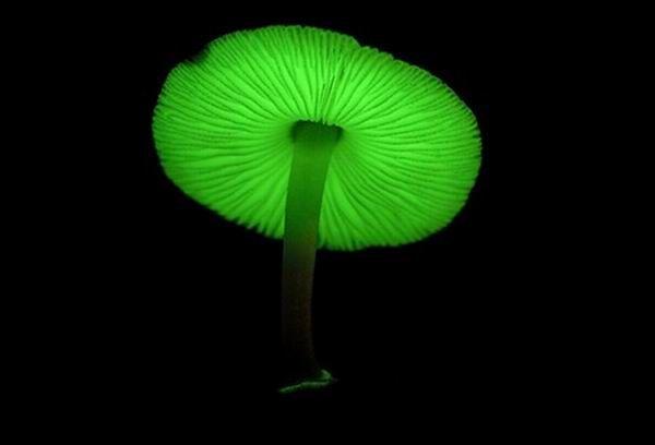 Російські вчені виявили, що всі гриби випромінюють світло