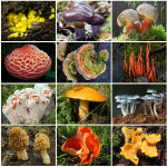 Самі незвичайні гриби