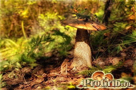 Збір підберезників: як виглядає і де росте гриб