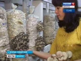 Сім'я з Усолья-Сибірського вирощує гливи