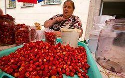 Збирати гриби і ягоди на камчатці тепер потрібно за правилами