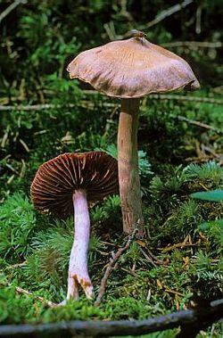 Техніка безпеки при збиранні грибів
