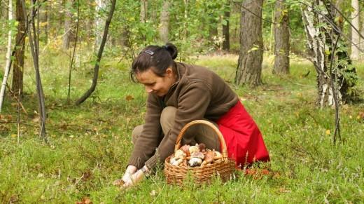 У Росії збирання та заготівля грибів з давніх пір прирівнюються до одного з національних видів спорту. Від грибника потрібно проявити терпіння, витривалість і, як мінімум, увагу.