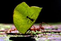 Німецькі біологи вперше виявили, в яких ділянках мурашника комахи залишають свої екскременти і чому вони не викидають їх разом з іншими відходами.