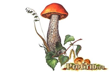 Дивно смачний гриб підосичники
